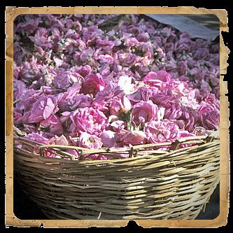 ROSA DAMASCENA-JANAS 016-30